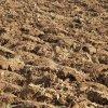 Испытания образцов почвы, отобранной вокруг потенциальных источников загрязнения